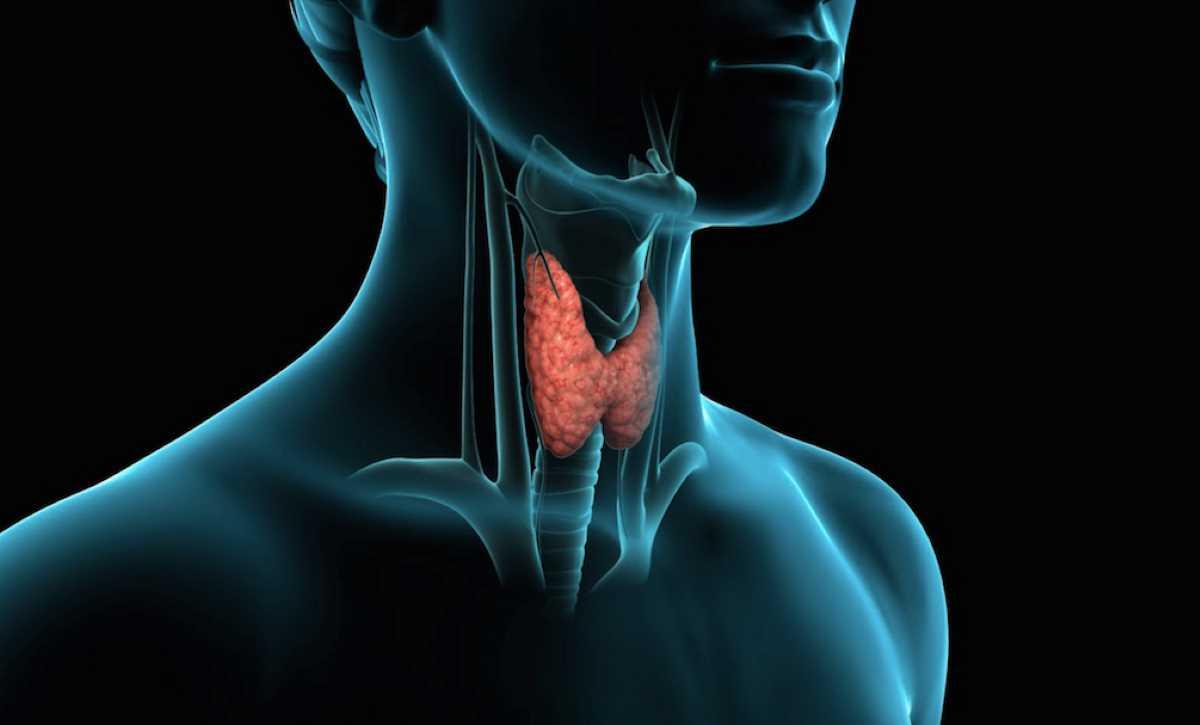 Disturbi tiroide_5504.jpg